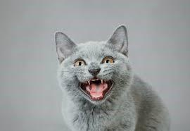 seller_cat