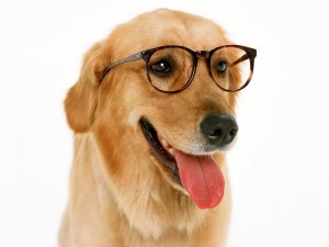 dog_teacher
